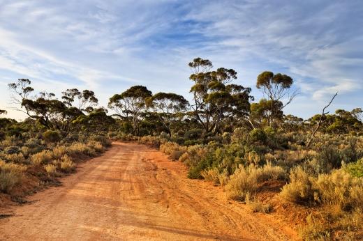 WA Balladonia Outback lit trail